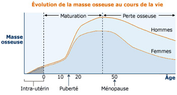 Evolution de la masse osseuse. *Graphique adapté de Fordham J. Osteoporosis : Your questions Answered, Churchill Livingstone, Angleterre, 2004